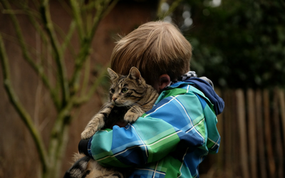 image for International Hug Your Cat Day